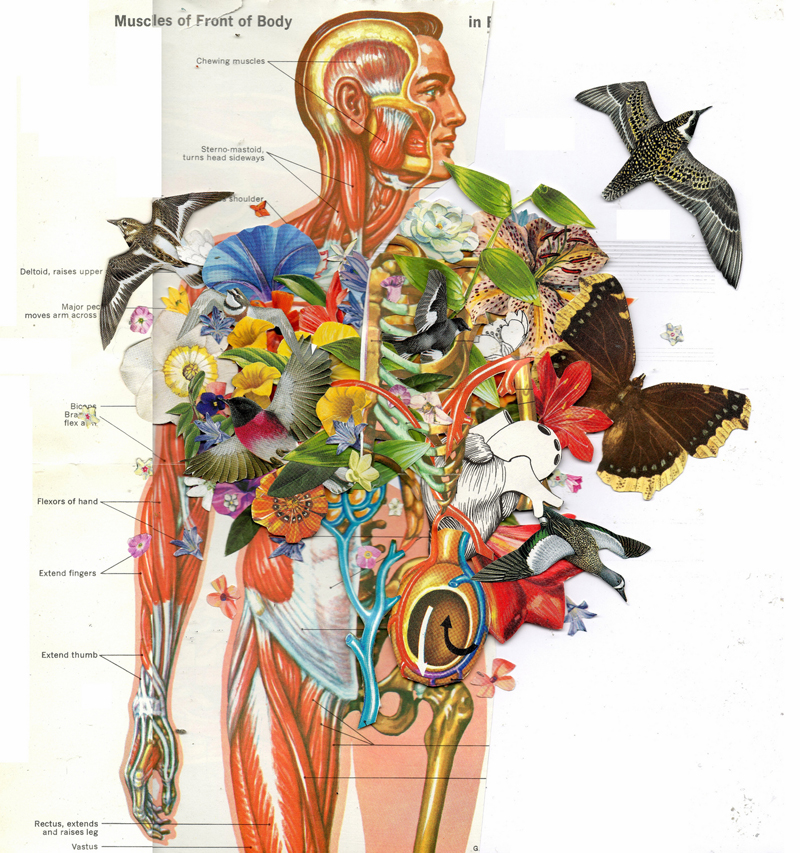 Human anatomy for art